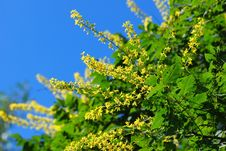 Free Yellow Flower On A Tree Royalty Free Stock Photos - 5811708