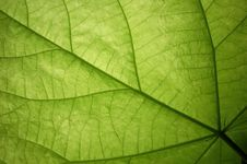 Free Leaf, Macro Royalty Free Stock Image - 5811776