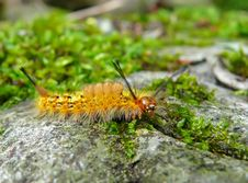 Free Close-up Of Caterpillar 9 Royalty Free Stock Photography - 5811887