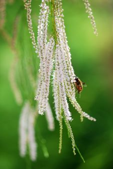 Free Bee On Flower Royalty Free Stock Photography - 5811937