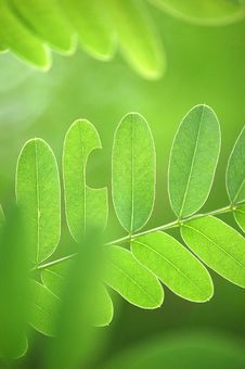 Free Leaves Stock Photo - 5811980