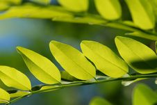 Free Green Leaves Stock Photography - 5811992