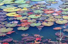 Free Thailand, Sukhothai: Historical Park Royalty Free Stock Photo - 5812705