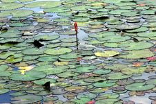 Free Thailand, Sukhothai: Historical Park Royalty Free Stock Image - 5812746