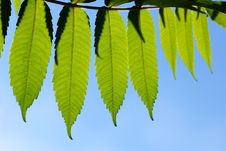 Free Green Leaves Stock Photos - 5813243