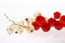 Free White And Red Currants Stock Photos - 5814043