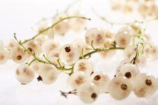 Free White Currant Stock Photo - 5814120
