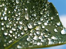 Free Leaf With Rain Drops Royalty Free Stock Image - 5814516