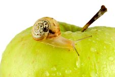 Free Snail And Apple Royalty Free Stock Photography - 5815027