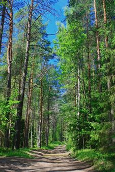 Free Forest Stock Photo - 5815050