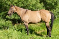 Free Beautiful Horse In Pasture Royalty Free Stock Photography - 5815057