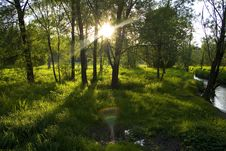 Free Green Forest Sunset Casting Long Shadows, Moscow Stock Photo - 5815290