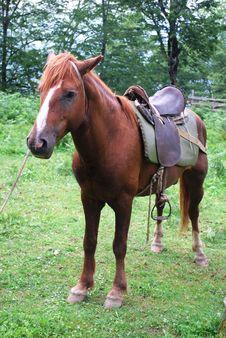 Free Horse Stock Photo - 5816090