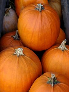 Free Pumpkins In A Box Royalty Free Stock Image - 5816146