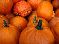 Free Small Pumpkins Royalty Free Stock Photography - 5816277