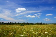 Free Summer Field Landscape Royalty Free Stock Image - 5816366
