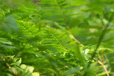 Free Green Fern Stock Images - 5816584
