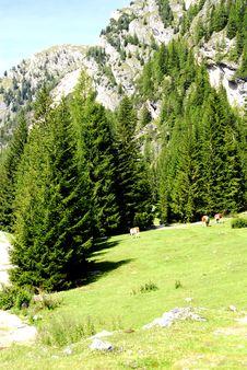 Free Dolomiti Stock Image - 5816901