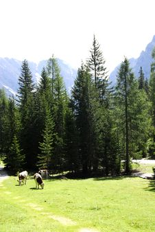Free Dolomiti Stock Photos - 5816943