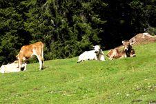 Free Dolomiti Royalty Free Stock Image - 5816946