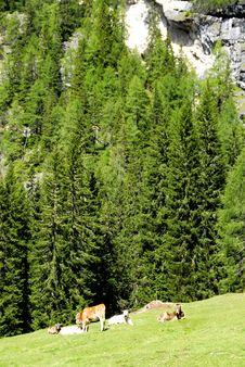 Free Dolomiti Stock Photography - 5816952