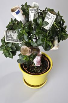 Free Money Tree Royalty Free Stock Image - 5817066