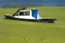 Free Boat In Green Desert Stock Photos - 5817703