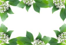 Green Plant Frame With Berries Royalty Free Stock Photo