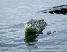 Free Crocodile Stock Image - 5818591