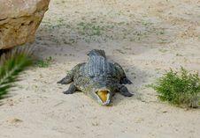 Free Crocodile Royalty Free Stock Images - 5818729