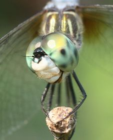 Free Dragonfly Royalty Free Stock Image - 5818736