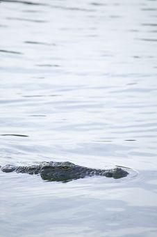 Free Crocodile Stock Photo - 5818750