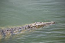 Free Crocodile Stock Images - 5818894