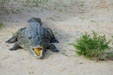 Free Crocodile Stock Images - 5818964
