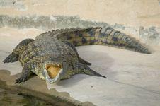 Free Crocodile Stock Images - 5819114