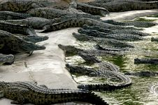 Free Crocodiles Stock Photography - 5819162