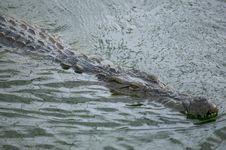 Free Crocodile Royalty Free Stock Photos - 5819178