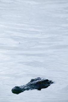 Free Crocodile Royalty Free Stock Photo - 5819195