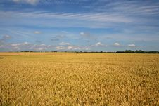 Free Wheat Field Royalty Free Stock Images - 5819249
