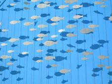Free Flying Fish Stock Image - 5819621