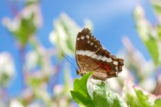 Free Single Butterfly Royalty Free Stock Images - 5819709