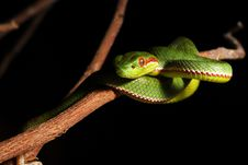 Free Green Snake Royalty Free Stock Photography - 5819847