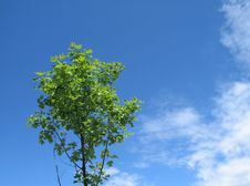 Free Small Green Tree In The Blue Sky Royalty Free Stock Photos - 5819908