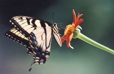 Free Butterfly Stock Images - 5819914