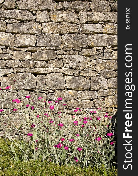 Pink flowers against brick wall