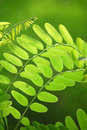 Free Leaves Stock Photos - 5824273