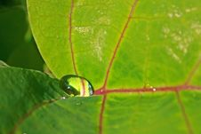 Free Water Droplet On Leaf Stock Photos - 5820233