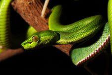 Free Green Snake Stock Photo - 5820260