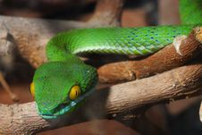 Free Green Snake Royalty Free Stock Images - 5820809
