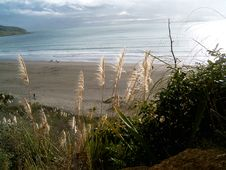Free Beach At Raglan, New Zealand Royalty Free Stock Photo - 5820885